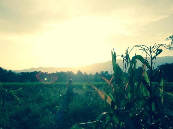 Vegan-Permaculture-Thailand