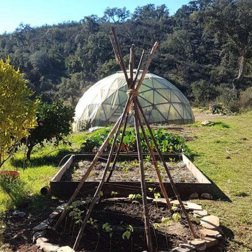 Vegan-permaculture-4